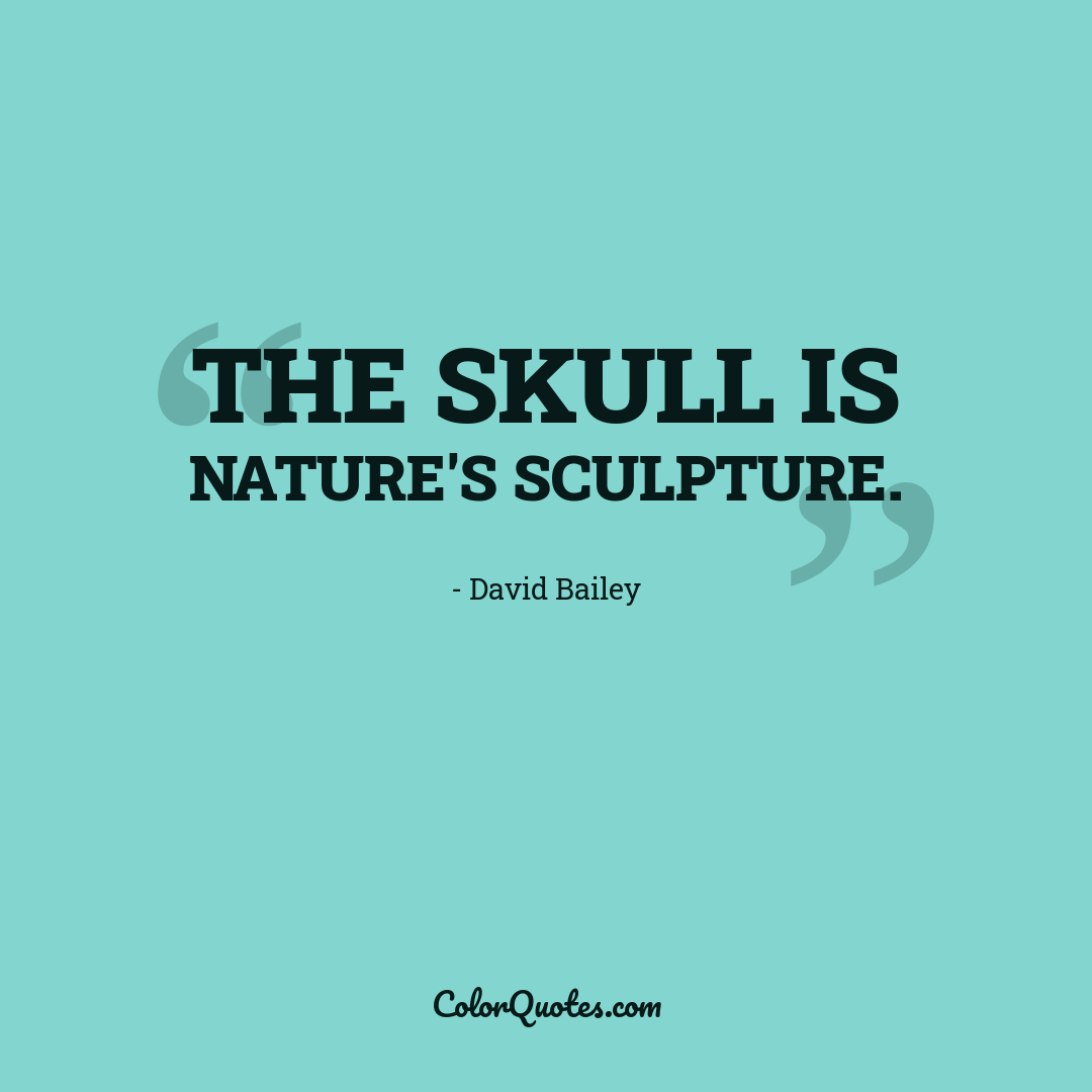 The skull is nature's sculpture.
