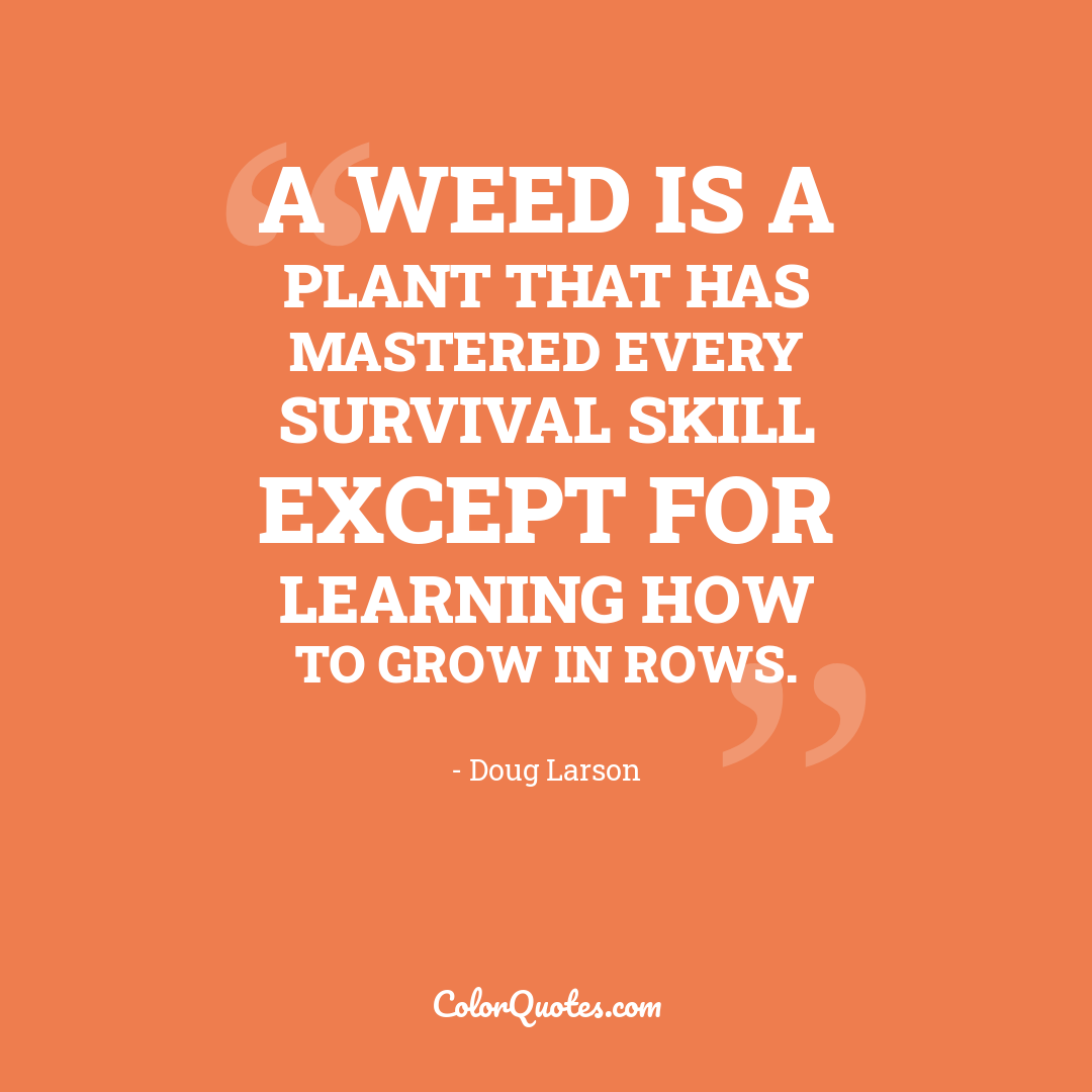 A weed is a plant that has mastered every survival skill except for learning how to grow in rows.