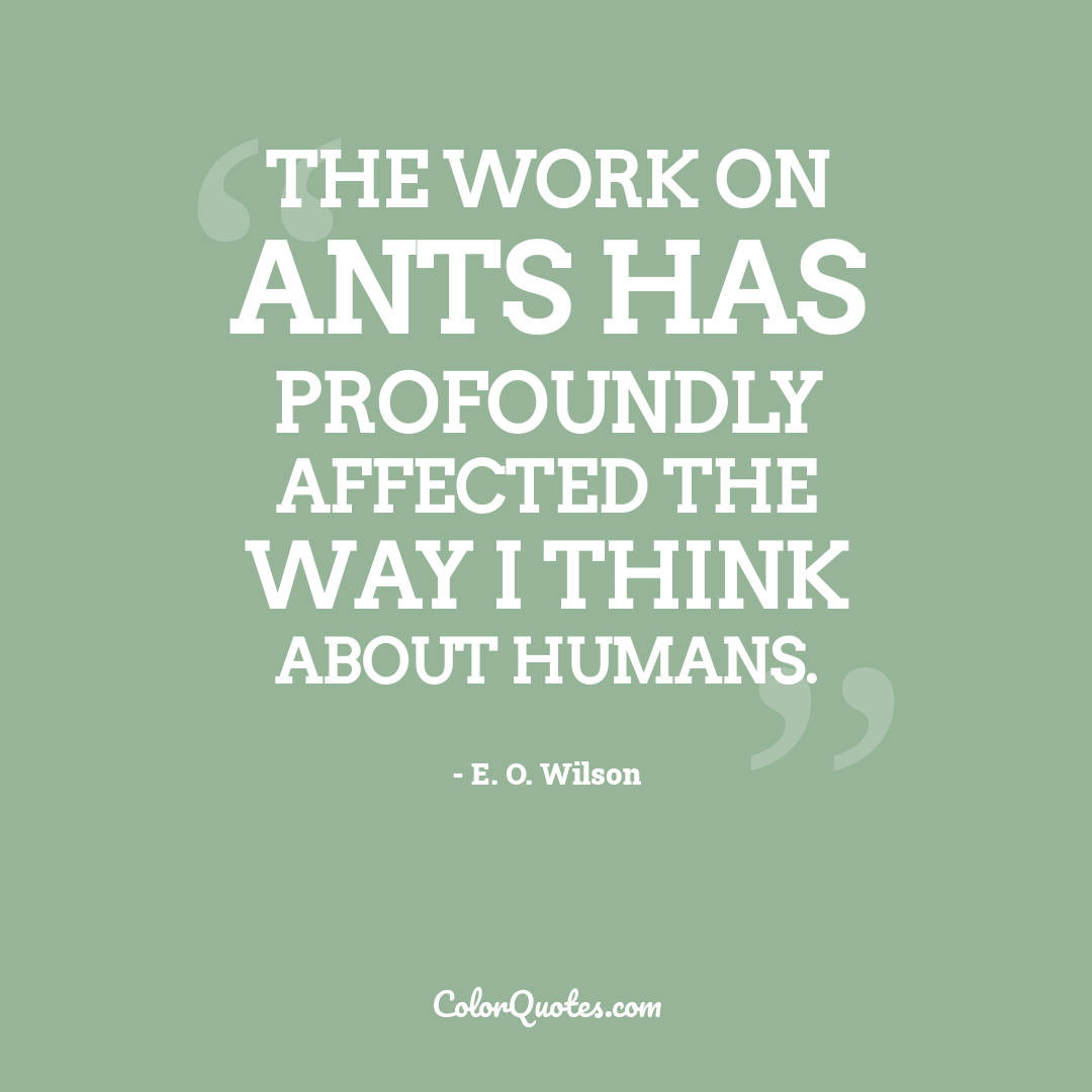 The work on ants has profoundly affected the way I think about humans.