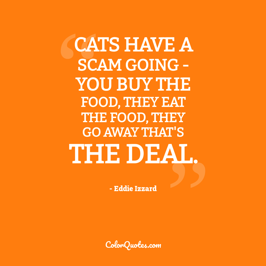 Cats have a scam going - you buy the food, they eat the food, they go away that's the deal.