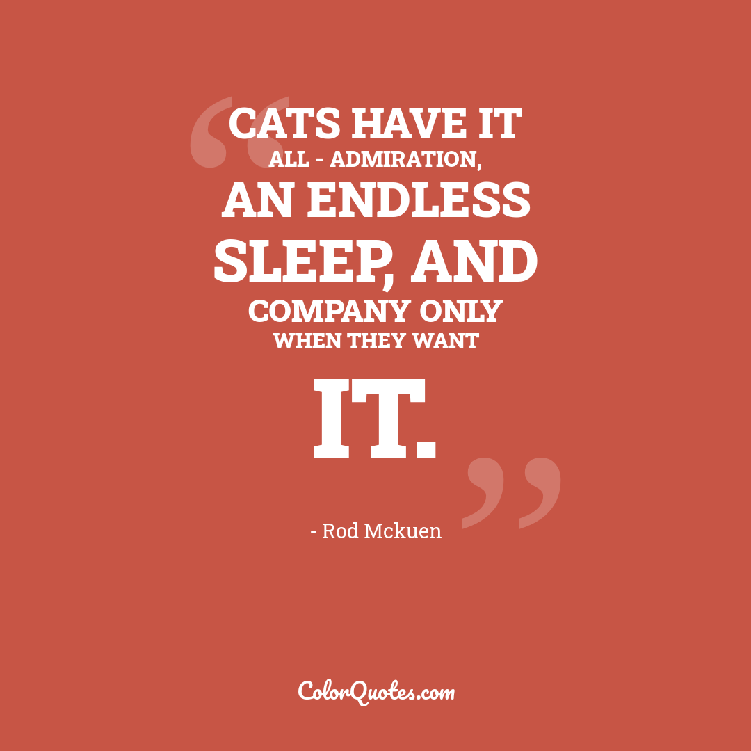 Cats have it all - admiration, an endless sleep, and company only when they want it.