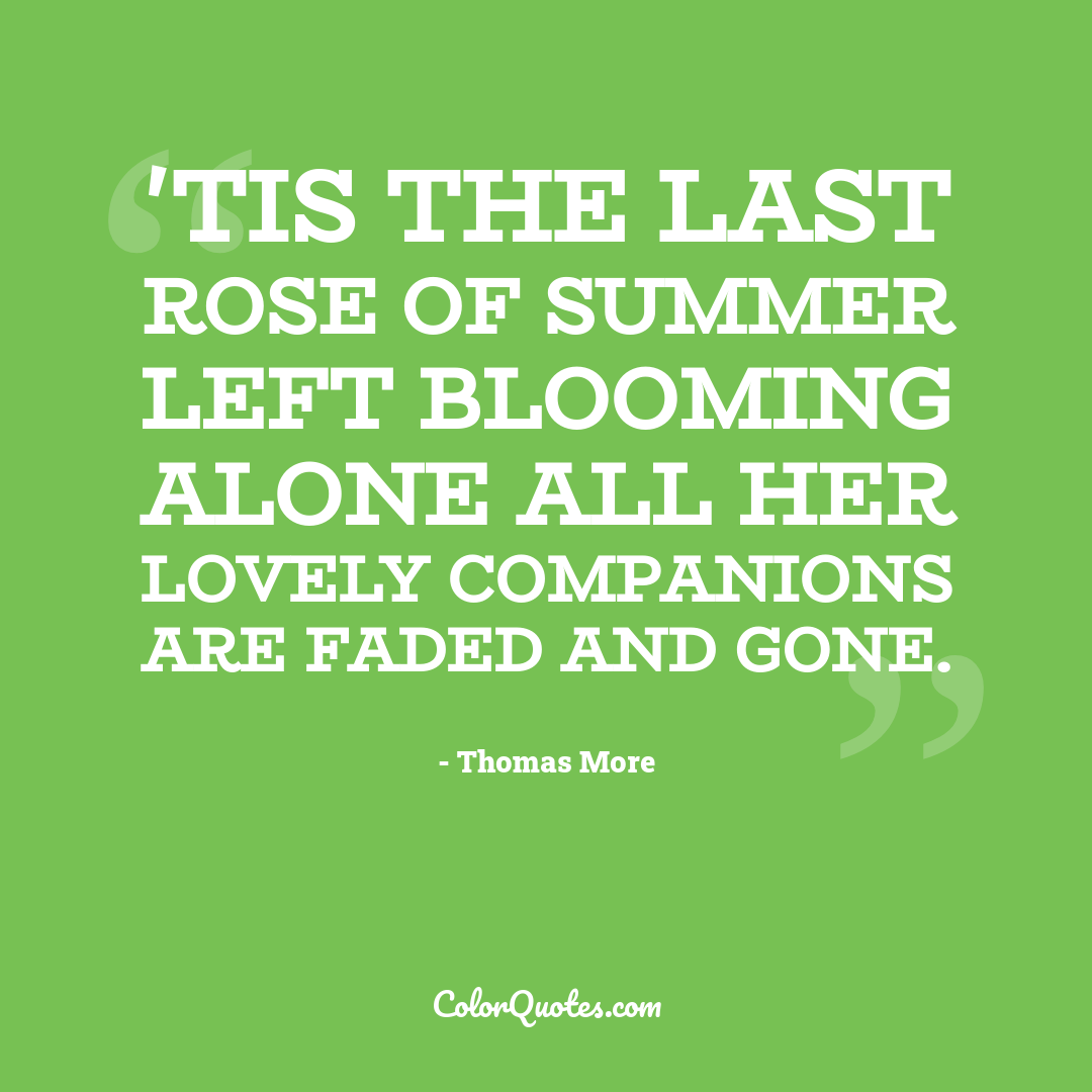 'Tis the last rose of summer Left blooming alone All her lovely companions Are faded and gone.