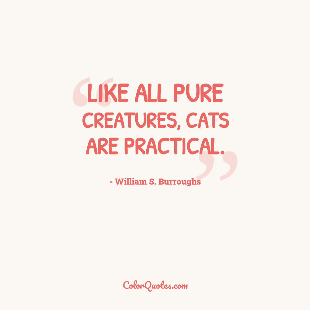 Like all pure creatures, cats are practical.